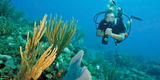 wcc-woman-diver-660x330